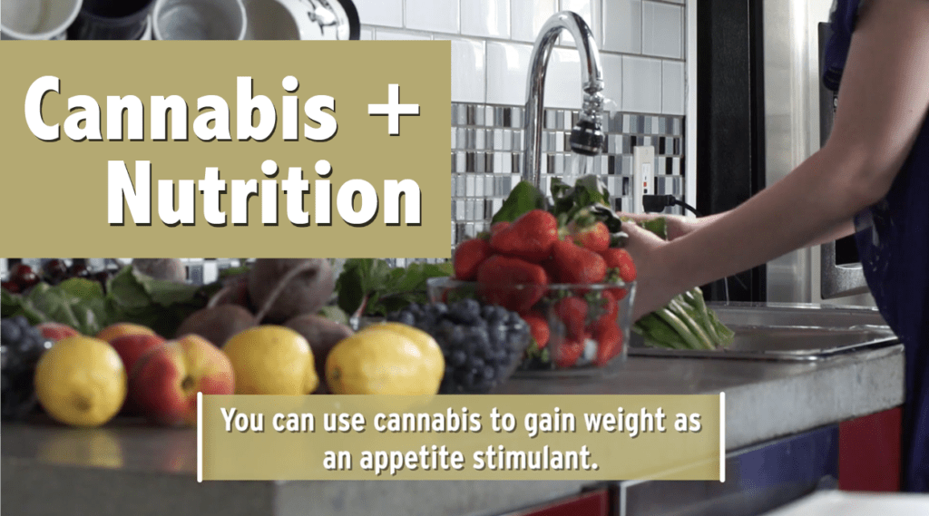 Cannabis and Nutrition – Weight Management and Mindful Munchies